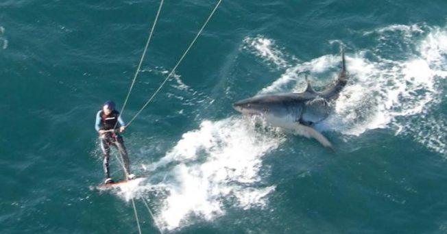 kitesurf requin
