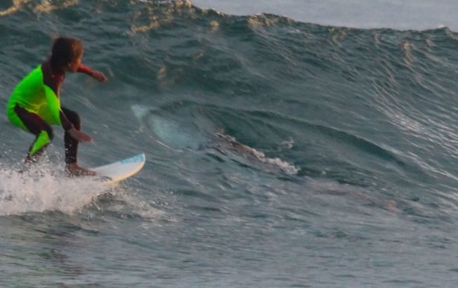 child-surf-shark