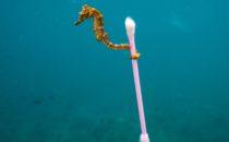 Le Plan de l'Europe contre la Pollution Plastique des Océans
